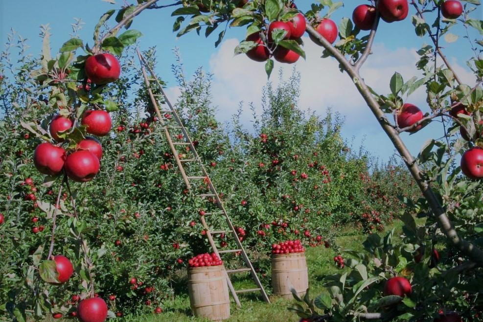 El medio ambiente y la agricultura